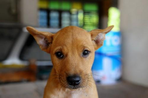 Отравление собаки крисиним ядом: симптоми, первая помощь, лечение, последствия