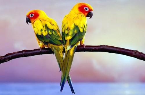 Что делать если попугай отравился? симптоми, лечение