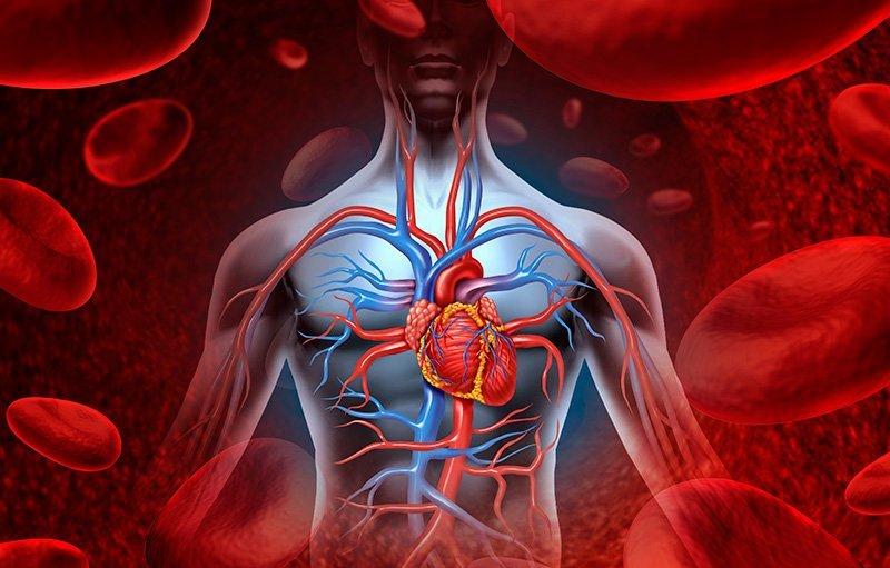 снижен холестерин в крови причины