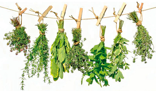 клизмы травами для очищения кишечника