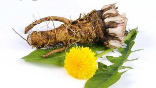 Трави для очищения сосудов от холестерина, бляшек