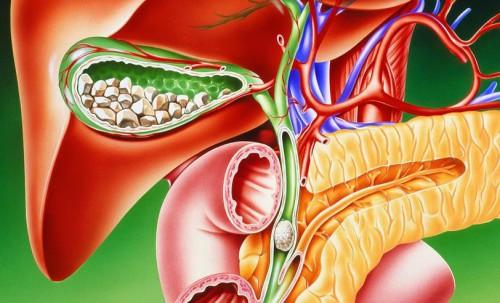 Чистка печени арбузом: рекомендации, противопоказания