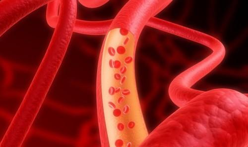 Схематичное изображение кровеносных сосудов