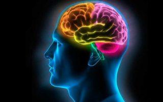 Мозг человеке