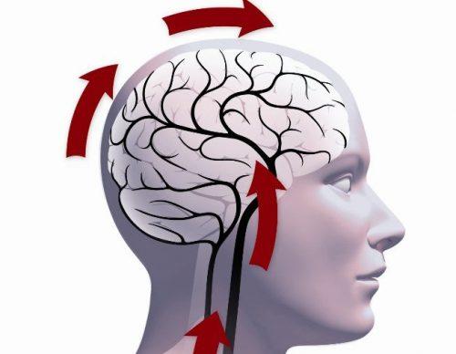 Схематичое изображение работы головного мозга