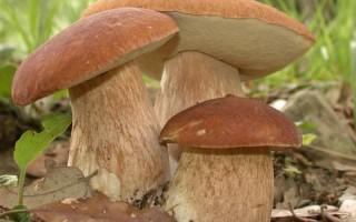 Как безопасно заготовить грибы на зиму