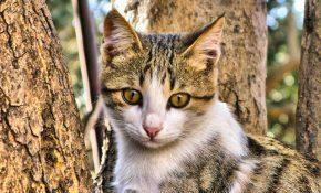 Симптомы отравления крысиным ядом у кошек