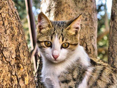 Кошка - охотник