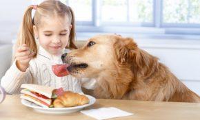 Яркие признаки отравления собаки