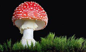 Через сколько часов появляются симптомы, свидетельствующие об отравлении грибами