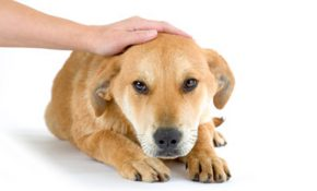 Какая доза изониазида смертельна при отравлении собак