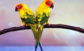 Отравление волнистого попугая, что делать