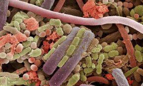 Отравления микробного происхождения