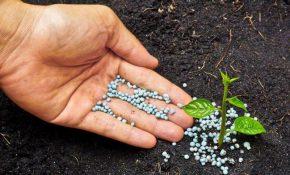 Отравление организма солями азотной кислоты - селитрой