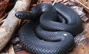 Лечебные свойства змеиного яда