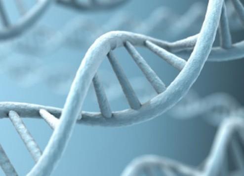 Генетическая цепочка