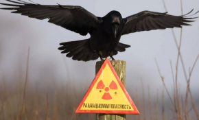 Заболевания, которые появляются из-за радиации