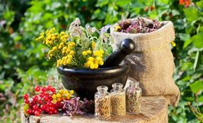 Очистка кишечника и печени с помощью трав