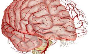 Советы по очищению сосудов головного мозга