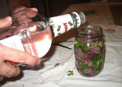 Настойка клевера на водке