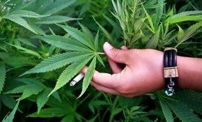 Передозировка природной марихуаной: симптомы и последствия